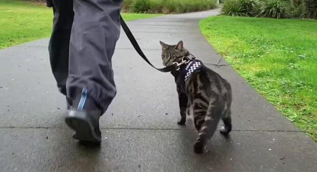 Kočka. Foto: snímek obrazovky YouTube