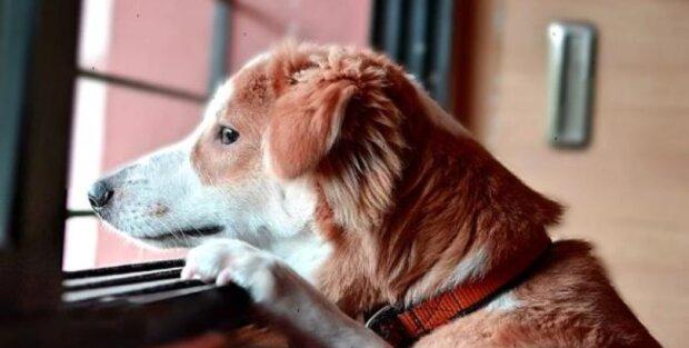 Psi cítí, když se majitel vrací domů