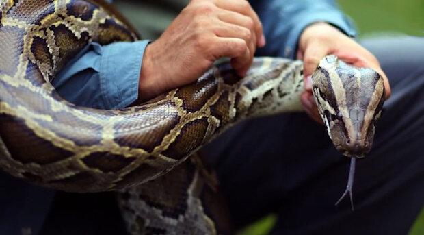 Podivné zvuky v podkroví: třímetrový had se stovkou zubů v ústech zabránil rodině sledovat televizi