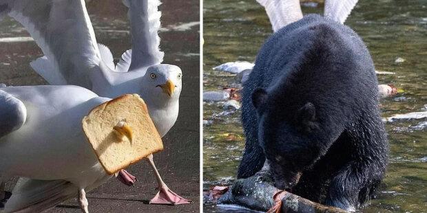 Spadl, uvázl, připojil se: Zvířata se také dostávají do směšných a vtipných situací