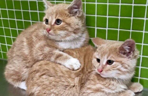 Stěžující si oči, kot'ata se k sobě přitiskla: koťata přišla k oknu kanceláře a prosila o pomoc