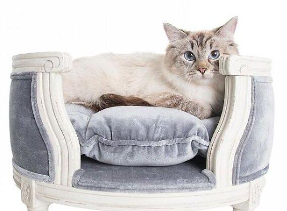 Luxusní nábytek pro kočky a psy, který stojí víc, než kolik lidé utratí za vlastní postel