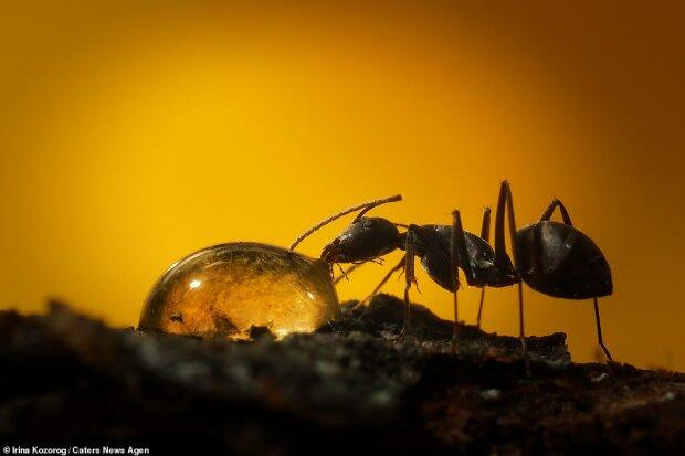 """""""Silná žízeň"""": fotografce se podařilo zachytit makro snímek života kolonie mravenců"""