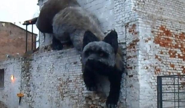 Obrovská černá liška vlezla do zříceniny domu a zůstala tam čekat: Na zvíře, které je o něco menší než dům, se přišli podívat obyvatelé města