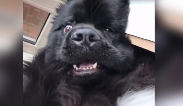 """""""Jack je chytrý pes, ale velmi laskavý"""": co pes udělal, když zloději pronikli do domu. Proč zloději potřebovali pantofle"""