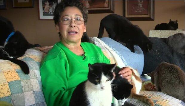 Armáda koček: Žena, která má ráda kočky přijala 1100 koček
