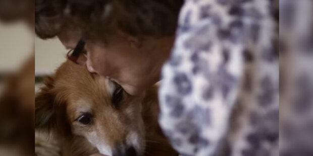 Čtyřnozí přátelé, kteří pracují: v jakých sférách by člověk bez psů neuspěl
