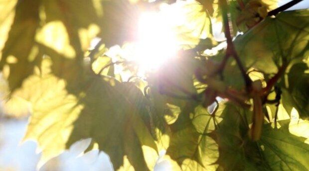 Babí léto v Česku: Meteorologové řekli, jak bude příští týden