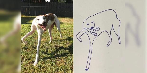"""Pro účast v soutěži kreseb dívka poslala křivku """"náčrtu"""" svého milovaného psa a zvítězila"""