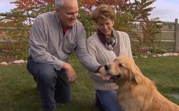"""""""Žádný pes je lepší než rettiver nebo labrador"""": Majitelé ukázali, jak se mohou bavit jejich čtyřnozí mazlíčci"""