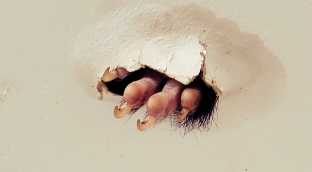 """""""Když jsem vešla do koupelny, všimla jsem si na stropě podivné chloupky"""": Žena našla ve svém domě nezvaného hosta"""