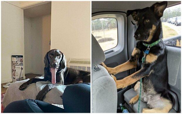 """""""Co se děje s vaším psem?"""": výběr vtipných fotek s """"nasprávnými"""" psy"""