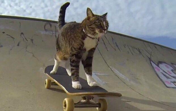 """Plní povely lépe než psi: kdo má titul """"nejchytřejší kočky na světě"""" a za co bylo zvířeti uděleno takové vyznamenání"""