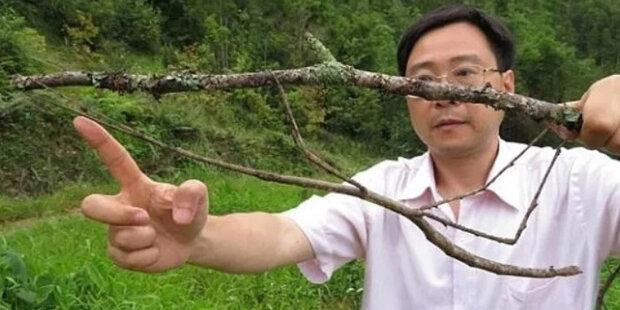 Největší hmyz na světě: Fotografie kobylky velikosti dlaně nebo můry 36cm