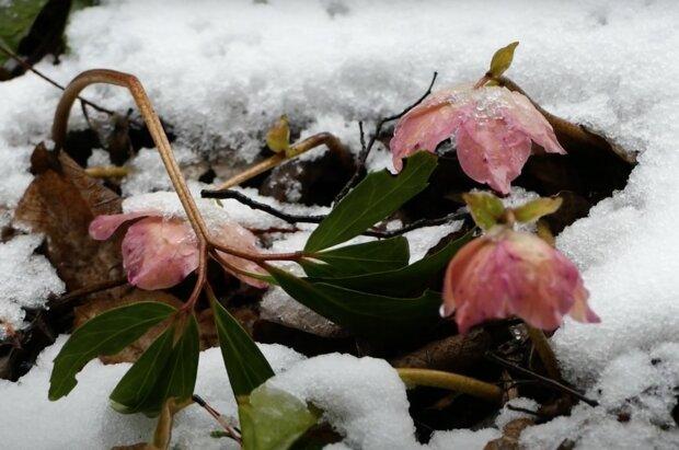 Občasné sněžení, déšť: Je známo, zda se o víkendu dočkáme výrazného oteplení
