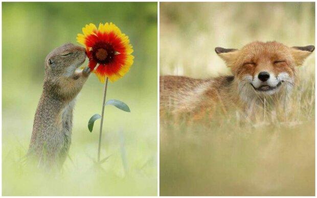 """""""Fotografování zvířat není vhodné pro slabé lidi"""": Neuvěřitelně roztomilé fotografie divoké zvěře od známého rakouského fotografa"""