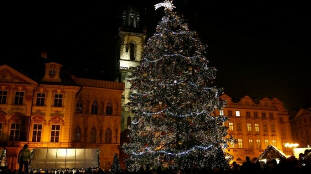 Pro vánoční trhy v Praze byl vybrán nádherný strom. Mluvčí prozradila, zda bude vztyčen