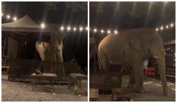Slon. Foto: snímek obrazovky YouTube