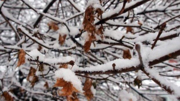 Sněhové srážky v nížinách: Předpověď počasí na víkend