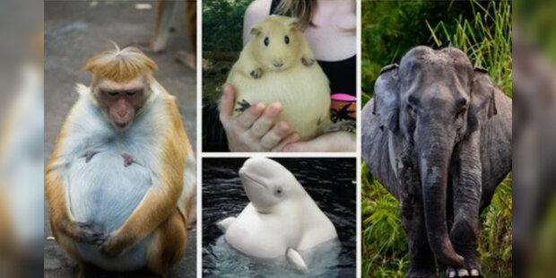 """""""Všechny maminky jsou velmi krásné"""": Těhotná zvířata, která jsme ještě neviděli"""
