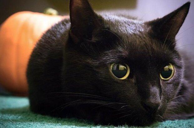 Jak černé kočky přinášejí štěstí a baví návštěvníky kavárny