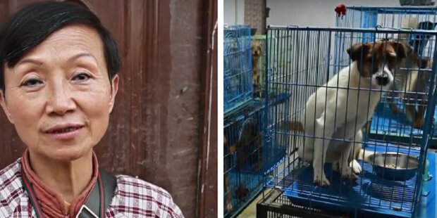 Žena adoptovala toulavého psa a pak dalších 1300 psů: Na pomoc toulavým zvířatům žena prodala byt