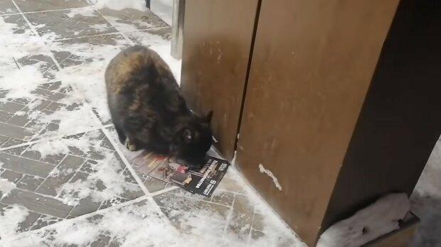 Žena s dcerou si všimli kočky bez domova, kterou její majitelka hledala osm a půl roku: jak žena potkala před lety ztracenou kočku