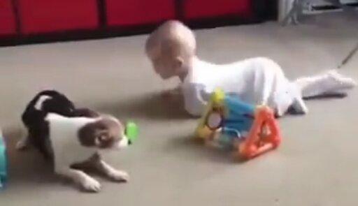 Malý pomocník: pes učí dítě plazit se