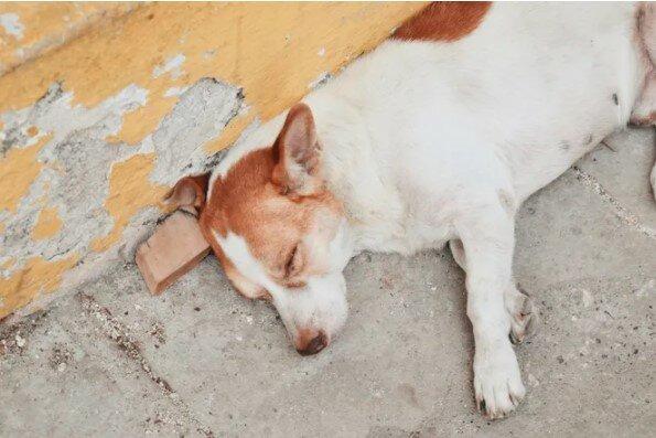 """""""Zasloužilí si slušnou postel"""": majitel obchodu s nábytkem se stará o toulavé psy"""