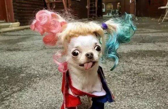 """""""Halloween pro zvířata"""": výběr nejoriginálnějších kostýmů, které vymysleli majitelé pro své mazlíčky"""