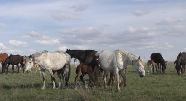 Hádanka o 17 koních. Foto: snímek obrazovky YouTube