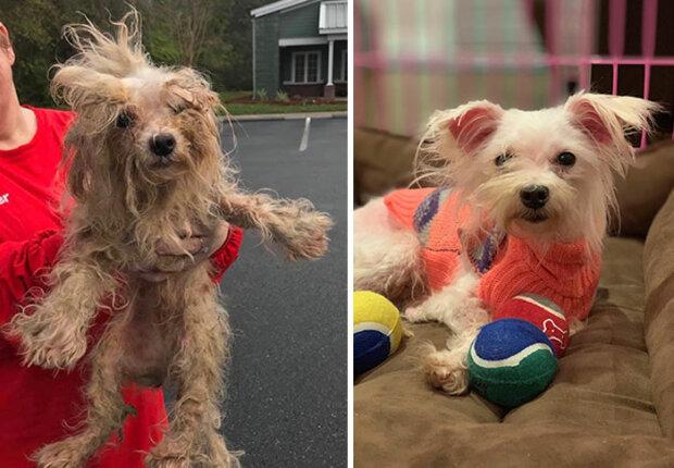"""""""Stát se jiným psem"""": Majitelé psů sdílejí fotografie svých mazlíčků, kteří se po návštěvě kadeřníka úplně změnili"""
