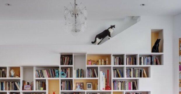 Kočičí dům: Brooklynský pár vytvořil dokonalý interiér pro své mazlíčky