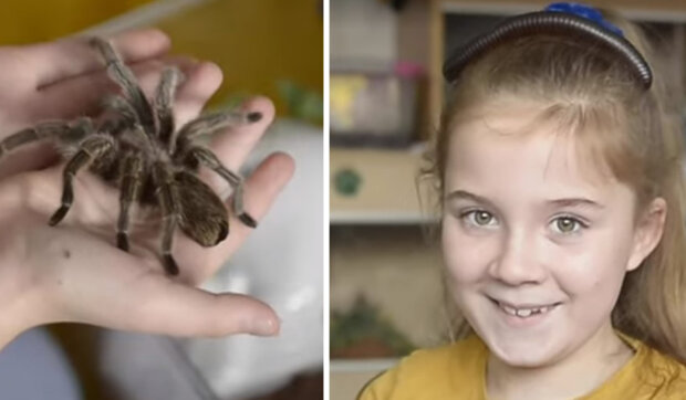 Pavouci, švábi a hadi v pokoji malé osmileté princezny: Halli Grinhalová proměnila svůj pokoj v opravdové terárium