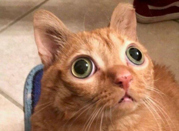 Kocour Brambora: život kocoura s neobvyklými očima
