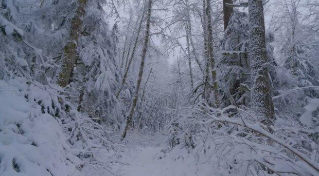 Sněhová zima přišla do Česka: Kde čekat silné sněžení a jaké problémy mohou očekávat řidiči i chodci