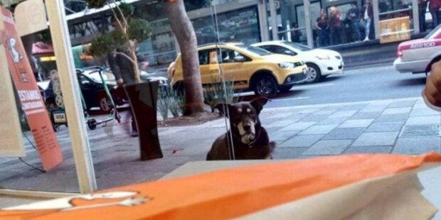 Podnikavý pes prosil o pizzu a už skoro dostal, ale všechno pokazil přívěsek na límci