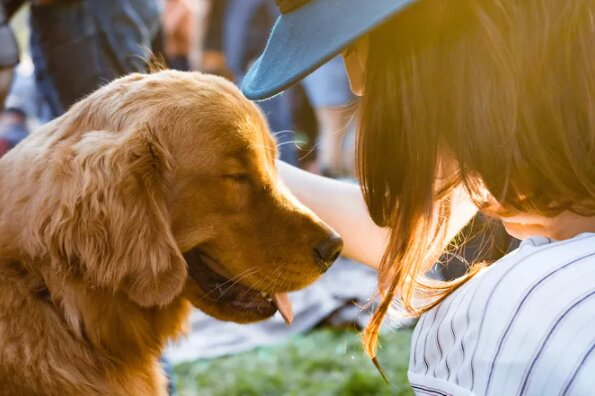 Láska dělá zázraky: fotografie toulavých psů před a po jejich záchraně