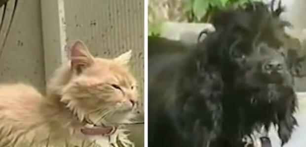 Zodpovědná kočka se rozhodla stát matkou sousedním štěňátkům