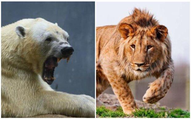 Nebezpečné, děsivé, ale krásné: hybridy divokých zvířat, které existují, ale většina lidí o nich nic neví