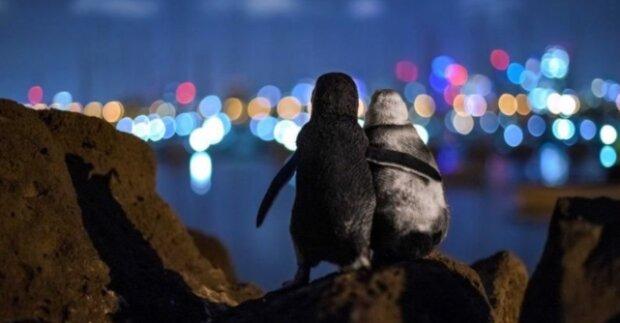Smutný, ale zároveň jasný příběh podpory tučňáků. Jaký byl příběh fotografie, která zvítězila ve fotografické soutěži
