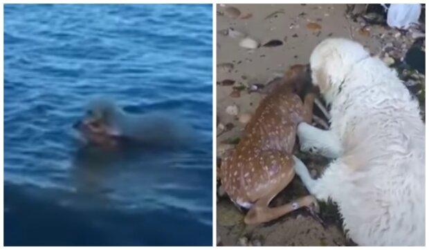 Pes a jelen. Foto: snímek obrazovky YouTube